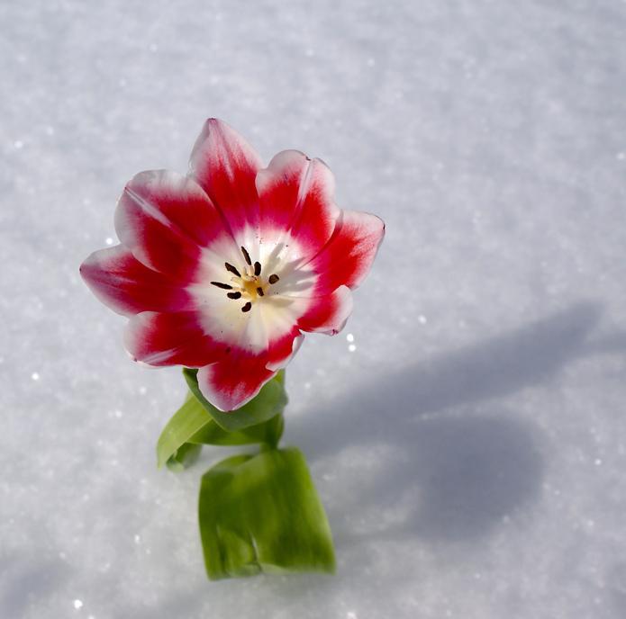 2012 feb 20 rosenmontag teil 2 das wachs muss ab - 3 8