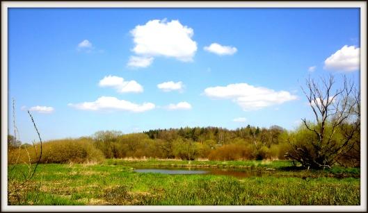 Wasserfeld