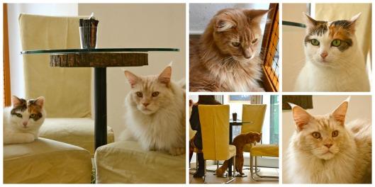 Katzencafe