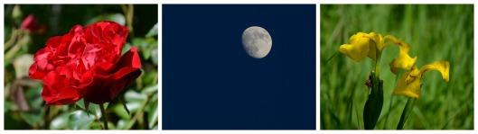 Collage Mond