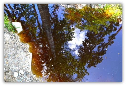 Spiegelung Baum