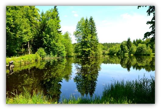 Teichspiegelung
