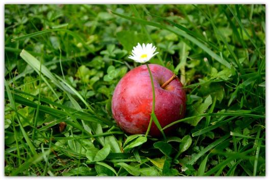 Apfel m
