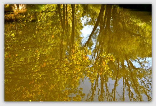 Spiegelung Bäume