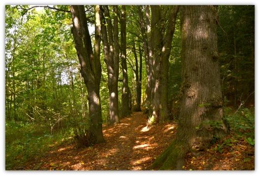 Waldweg1