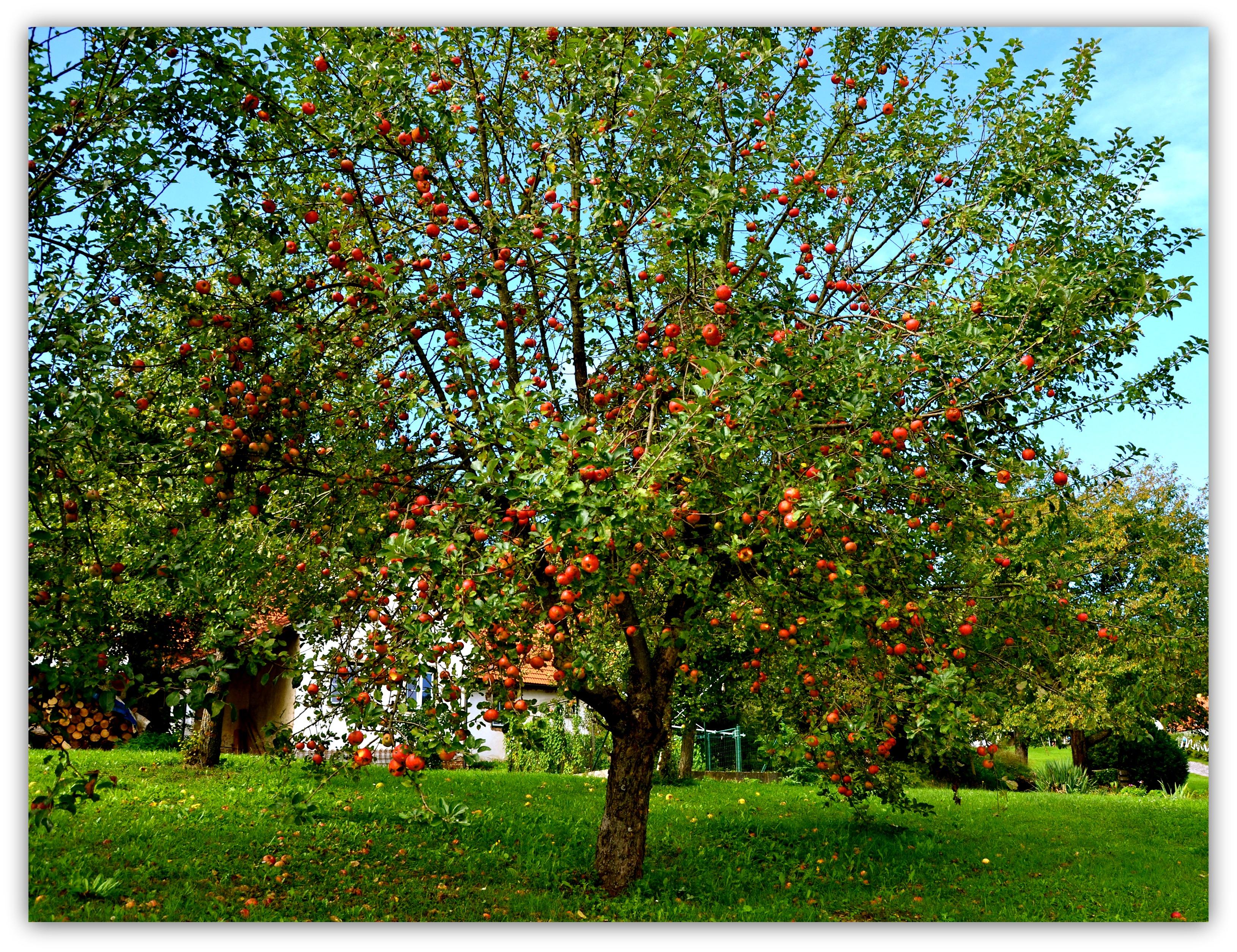 Apfelbaum Twinsie S Blog