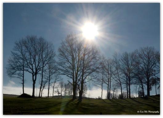 Sonnenbäume
