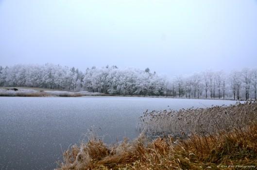 Teich im Raureif