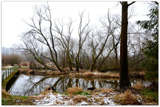 Baumspiegelung3