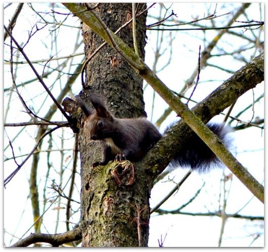 Eichhörnchen3