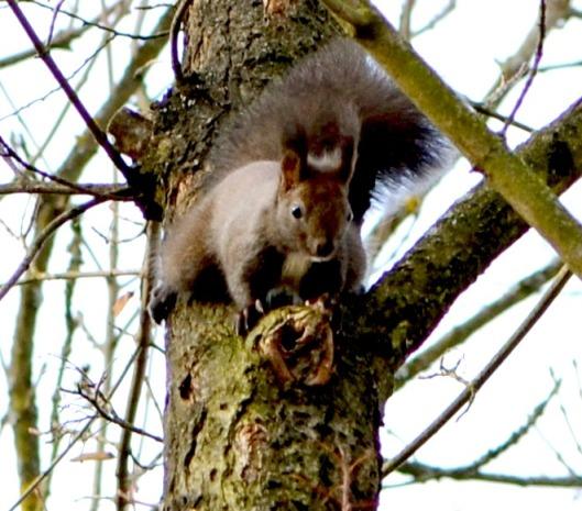 Eichhörnchen4