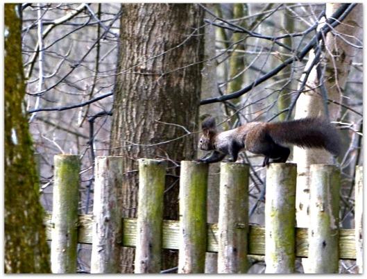 Eichhörnchen5