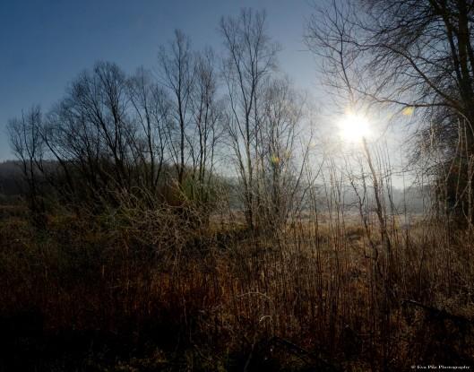 Ein Morgen erwacht Kopie