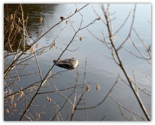 Stein im Teich