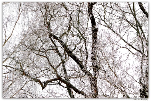 Bäume mit Reif
