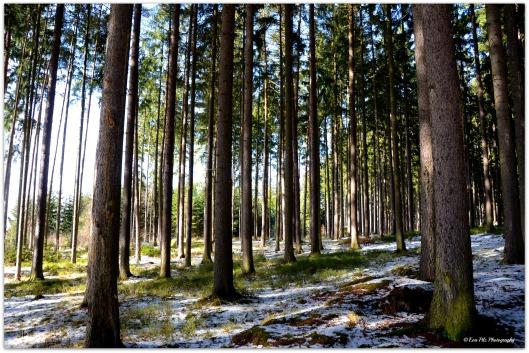 Wald angezuckert