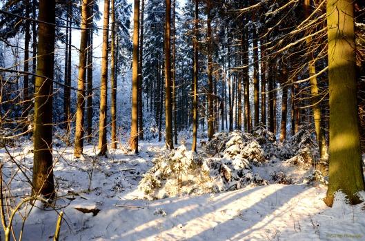 Winterwald1
