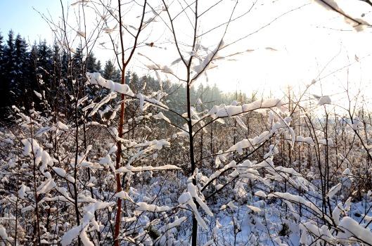 Winterwunderland2