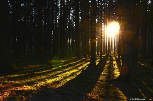 Sonnenuntergang Wald3