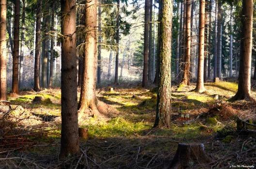 Waldlicht2