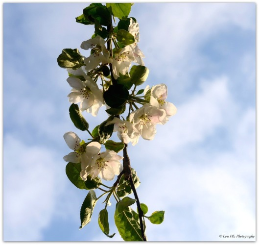 Blüten 4