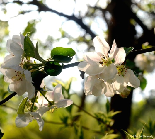 Blüten 6