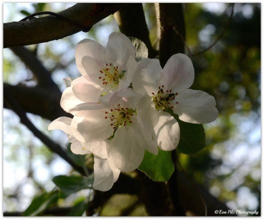 Blüten3