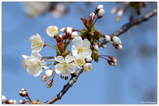 Blüten6