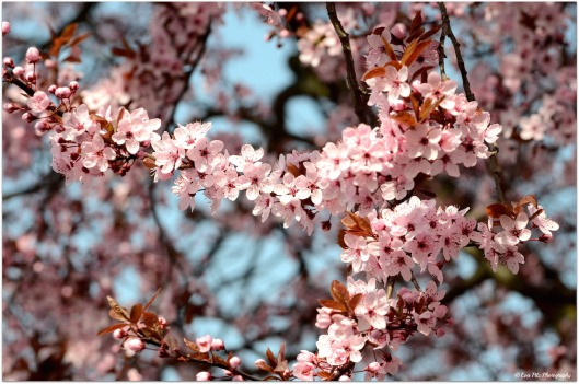 Blütenrausch5