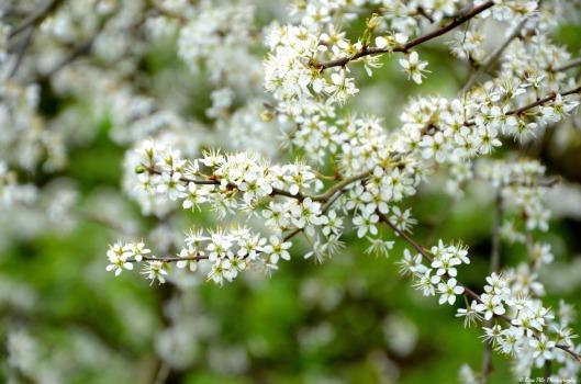 weißter Blütenzauber