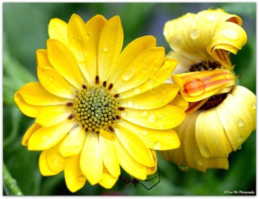gelbes Kapkörbchen