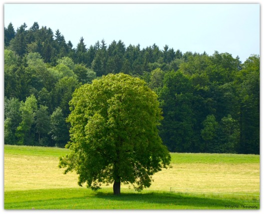 schützender Baum