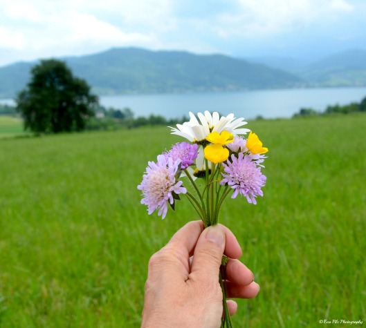 Wiesenblumen vom Attersee
