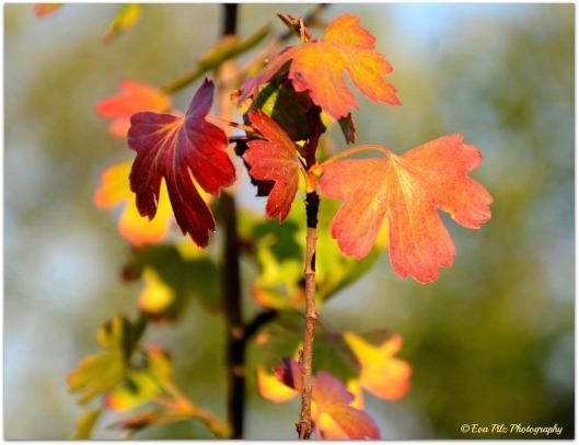 Herbstfarben8