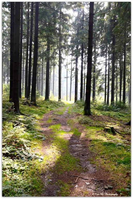 Waldweg8