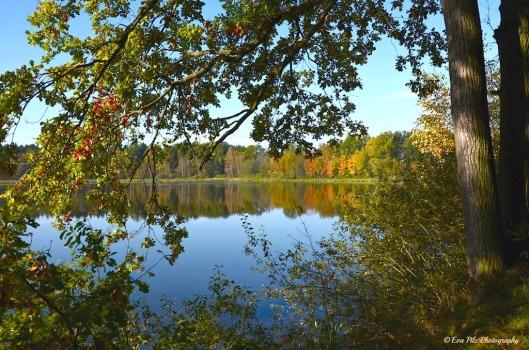 Assangteich im Herbst