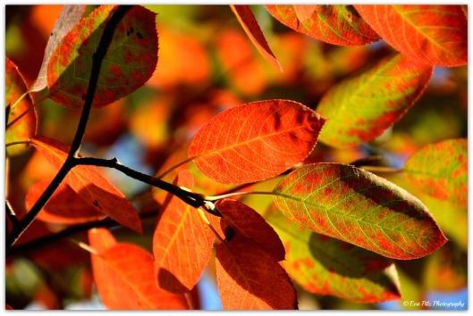 bunte Blätter6