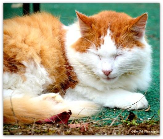 schlafende Katze1