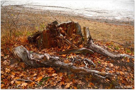 Baumstumpf mit Blättern
