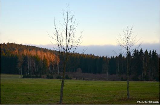 Bäume im November