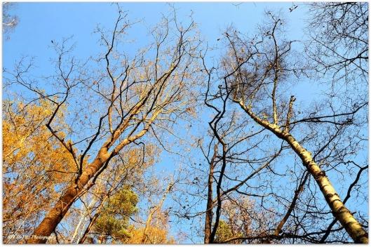 Bäume6