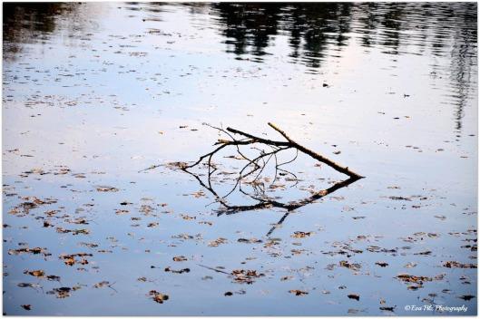 Blätter im Wasser6