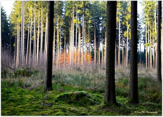 feuriger Wald