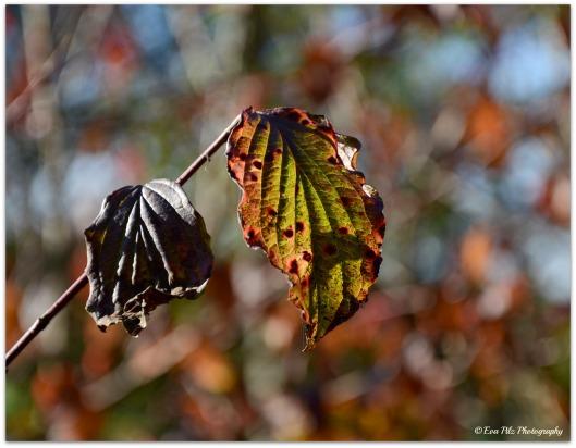 Herbstblatt11