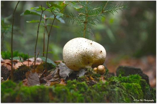 Pilz auf Baumstamm