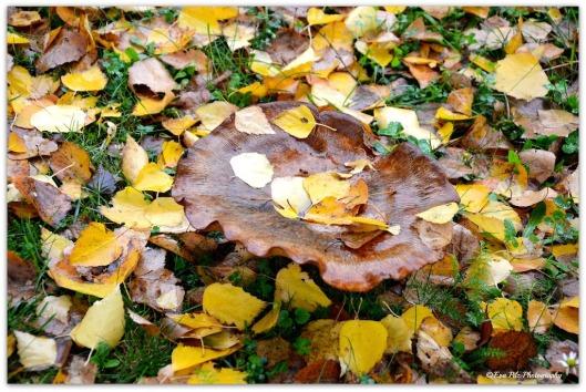 Pilz mit Blättern