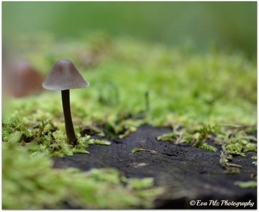 Pilzchen