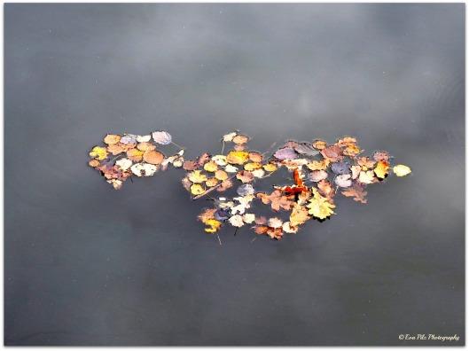 schwimende Blätter