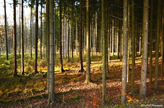 Waldlicht7