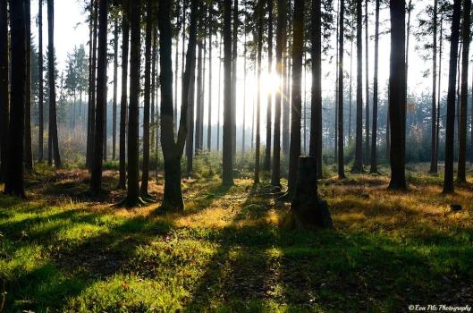 Waldsonnenlicht